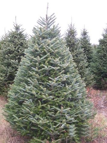 Jim Smith's Christmas Trees - Home Page
